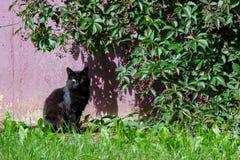 Gato preto que senta-se sob um arbusto no verão fotos de stock