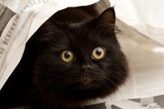 Gato preto sob um jornal Imagens de Stock