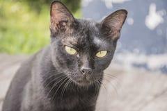 Gato preto sujo Fotos de Stock