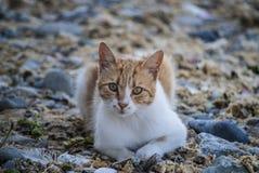 Gato puesto en la playa Fotos de archivo libres de regalías