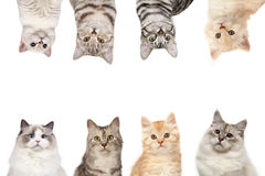 Gato-quadro Foto de Stock Royalty Free