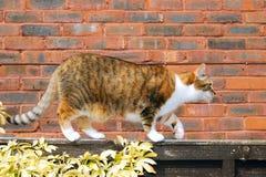 Gato que acecha a lo largo de la cerca del jardín Imagen de archivo libre de regalías