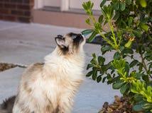 Gato que admira el jardín Imagen de archivo