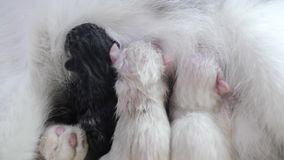 Gato que alimenta pequeños gatitos lindos en casa pequeño recién nacido los gatitos Gatitos preciosos que duermen junto en aislad metrajes
