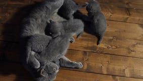 Gato que alimenta seus bebês filme