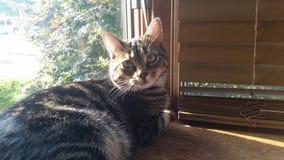 Gato que ama la repisa de la ventana Foto de archivo libre de regalías