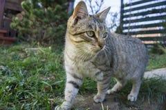 Gato que anda em uma cerca Imagens de Stock Royalty Free