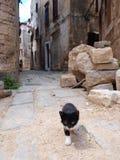 Gato que anda na rua Foto de Stock