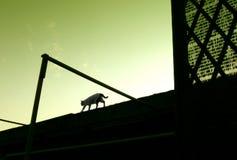 Gato que anda no telhado Imagem de Stock Royalty Free