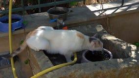 Gato que bebe de un cuenco almacen de metraje de vídeo