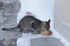 Gato que bebe de un cuenco de leche Foto de archivo libre de regalías