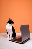 Gato que bosteza sobre la computadora portátil Imagen de archivo