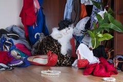 Gato que busca cosas en la señora del guardarropa Foto de archivo libre de regalías