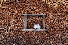 Gato que busca un lugar caliente entre los pedazos de madera Fotografía de archivo libre de regalías