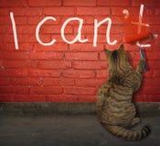 Gato que cambia la palabra foto de archivo