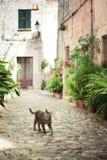 Gato que camina abajo de la calle Imagen de archivo