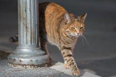 Gato que camina cerca Fotos de archivo libres de regalías