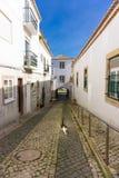 Gato que camina en la arquitectura tradicional hermosa de Lagos Portugal imagen de archivo libre de regalías