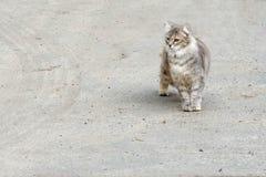 Gato que camina en la tierra Copie el espacio imagen de archivo