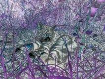 Gato que coloca na grama imagem de stock