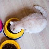 Gato que come alimentos para animais de estimação em uma bacia imagem de stock