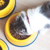 Gato que come alimentos para animais de estimação em uma bacia fotos de stock