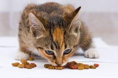 Gato que come el alimento Imagen de archivo libre de regalías