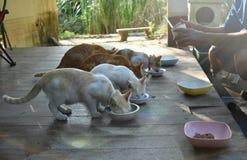 Gato que come la comida para gatos en el cuenco Imagen de archivo