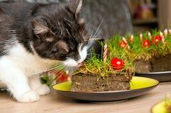 Gato que come la torta de la hierba Imagen de archivo