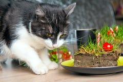 Gato que come la torta de la hierba Foto de archivo libre de regalías