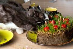 Gato que come la torta de la hierba Imagen de archivo libre de regalías