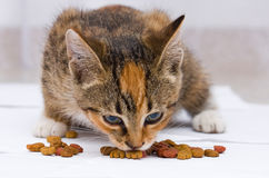 Gato que come o alimento Imagem de Stock Royalty Free