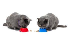 Gato que come o alimento isolado no fundo branco Imagens de Stock Royalty Free