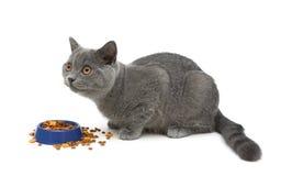 Gato que come o alimento no fundo branco Fotos de Stock Royalty Free