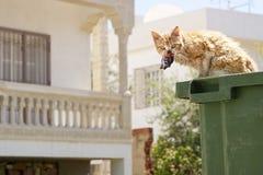 Gato que come pescados de una poder de basura Fotografía de archivo