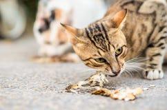 Gato que come um peixe fotografia de stock royalty free