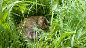 Gato que descansa na grama Imagens de Stock