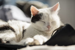 Gato que descansa sobre una cama Foto de archivo