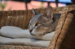 Gato que descansa sobre una silla Imágenes de archivo libres de regalías