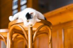 Gato que descansa sobre una silla Foto de archivo