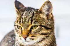Gato que desengaça em sua rapina Imagem de Stock Royalty Free