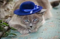 Gato que desgasta un sombrero azul Foto de archivo libre de regalías