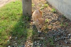 gato que despierta en la tierra Imagen de archivo