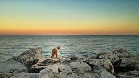 Gato que disfruta de la puesta del sol Fotografía de archivo libre de regalías