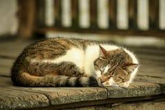 Gato que dorme em placas de madeira velhas. Foto de Stock Royalty Free