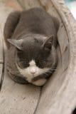 Gato que dorme em um barco fotografia de stock royalty free