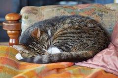 Gato que dorme em um sofá Foto de Stock Royalty Free