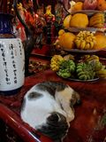 Gato que dorme em um templo budista em Hanoi, Vietname foto de stock