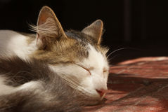 Gato que dorme em uma casa Fotos de Stock Royalty Free
