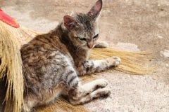 Gato que dorme em uma vassoura Fotos de Stock Royalty Free